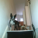 Happy dog walking clients of KatyK9