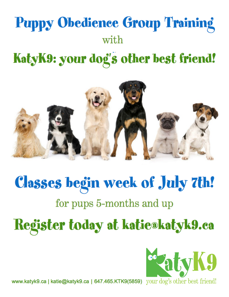 Puppy group obedience class starting July in Leslieville