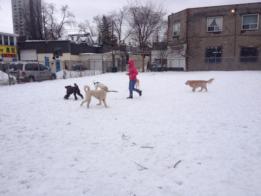 Katy9 plays with dogs in the winter