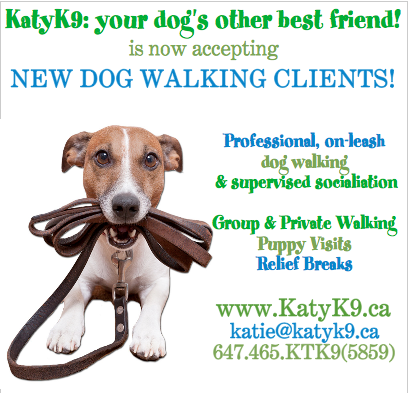 KatyK9 is accepting new dog walking clients in Leslieville, Riverside, Riverdale Toronto