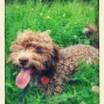 Darwin puppy trainer KatyK9