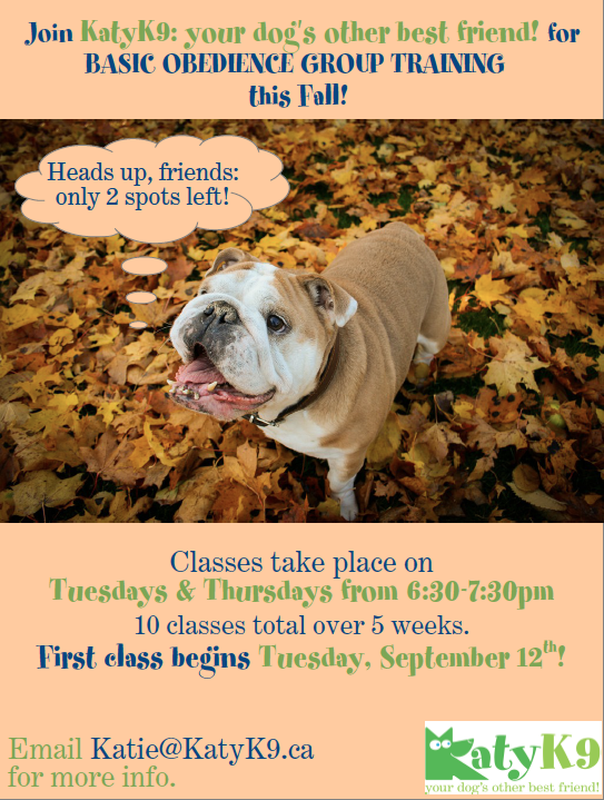 dog training group class obedience Toronto