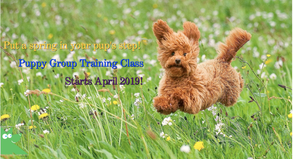 puppy training, group classes for puppie in Toronto